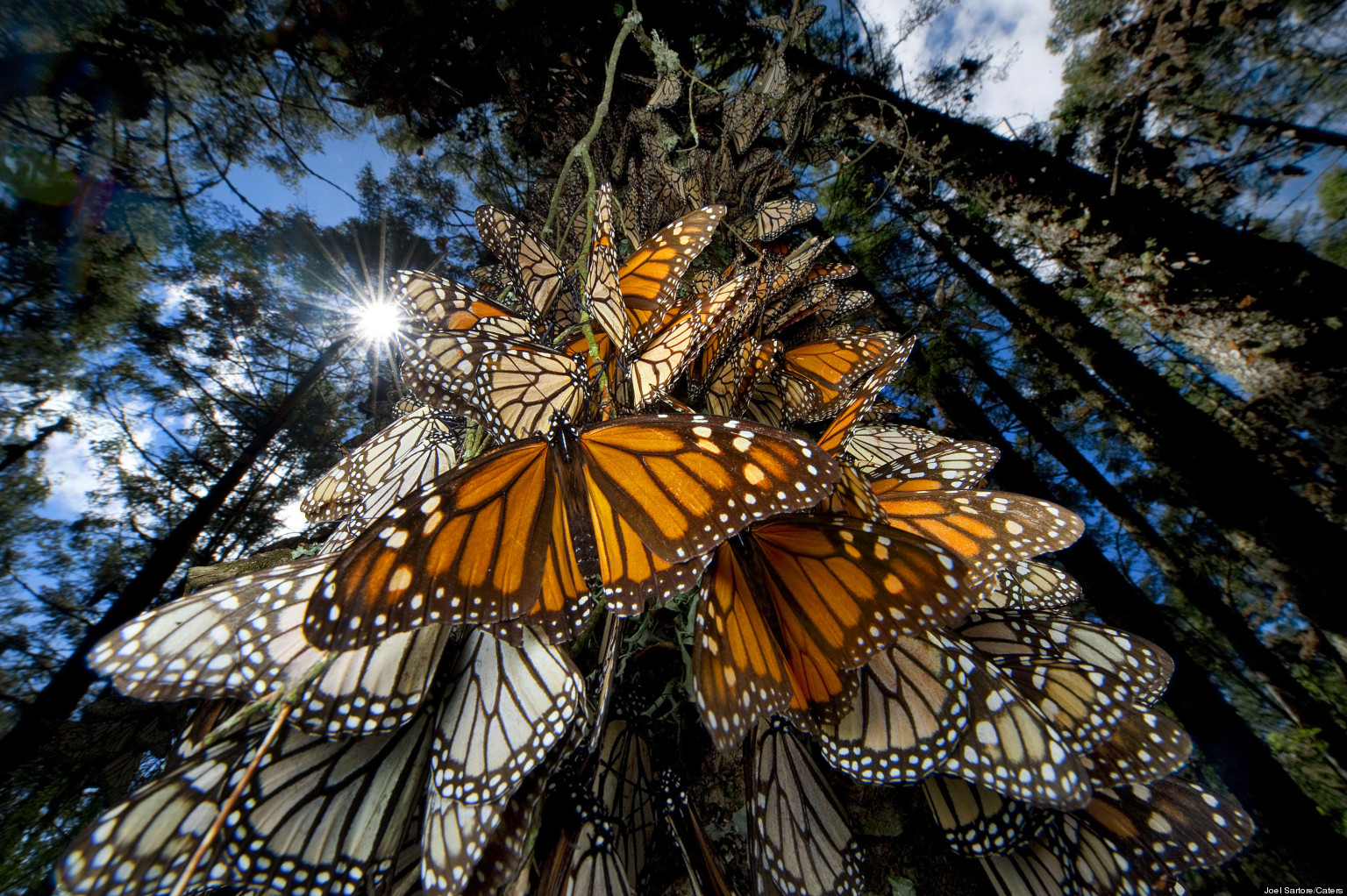 Mingle with millions of monarchs in Mexico